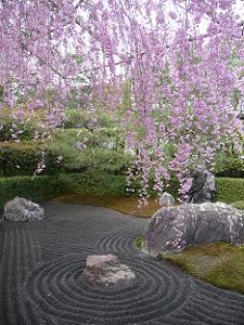 陰の庭と八重紅枝垂れ桜