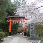 宇治神社と宇治上神社の桜・2017年
