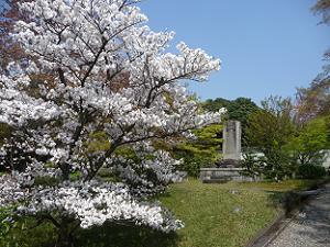 青空と真っ白な桜