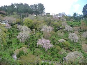 白山桜あじさい苑