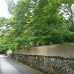 初夏の大徳寺境内を歩く・2017年