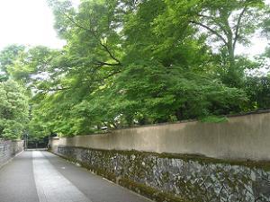 北側の参道の新緑