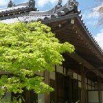 晴天の日に見る常寂光寺の新緑・2017年