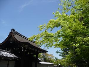 勅使門と新緑