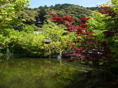 放生池と新緑