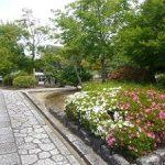 智積院のサツキと咲き始めのアジサイ・2017年