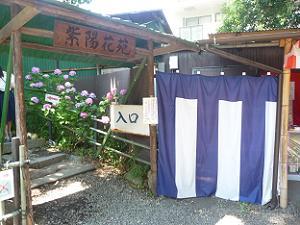第一紫陽花苑