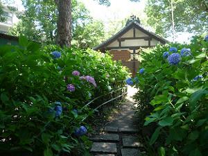第一紫陽花園の出口