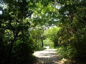 緑に包まれた遊歩道