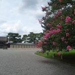 京都御苑で見ごろを迎えたサルスベリ・2017年