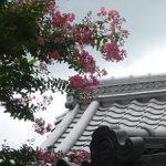 下御霊神社のサルスベリ・2017年