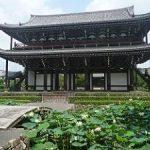 東福寺の思遠池で咲くハス・2017年