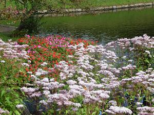 フジバカマと秋の花
