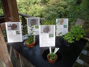 薬用植物と和の花