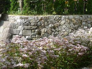 フジバカマと石垣