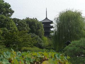 五重塔と枝垂れ柳