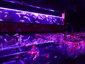 水戯の舞台