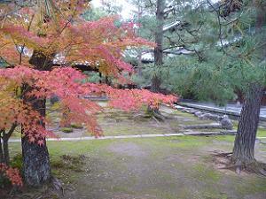 仏殿と法堂の間の紅葉
