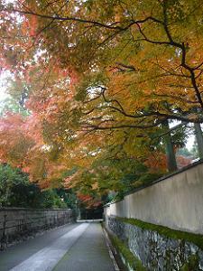 龍翔寺の紅葉