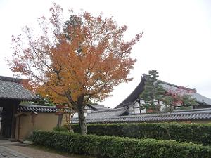 聚光院前の紅葉