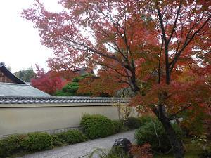 芳春院の参道の紅葉