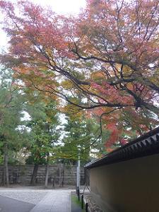 三玄院の紅葉