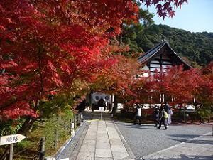 大玄関付近の紅葉