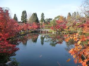 放生池と紅葉