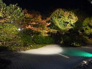 南庭のライトアップ