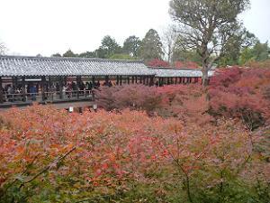 紅葉と通天橋