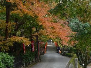 鳥居橋付近の紅葉