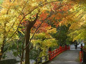 鳥居橋と紅葉