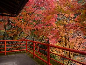 お茶所から見る紅葉