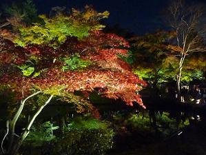 臥龍池のほとりの紅葉