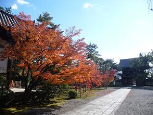 紅葉と南大門