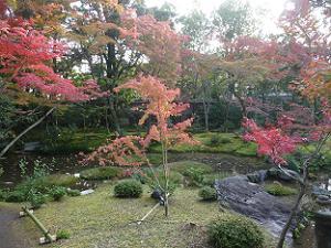 水の流れと紅葉
