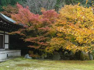 仙遊庭の紅葉