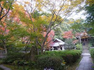 来迎院境内の紅葉