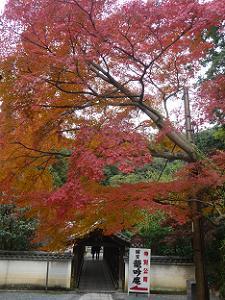 偃月橋と紅葉