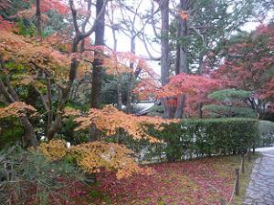 玄関付近の紅葉