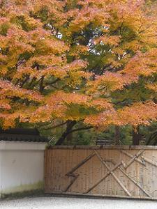 竹垣と紅葉