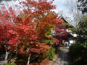 寺務所と紅葉