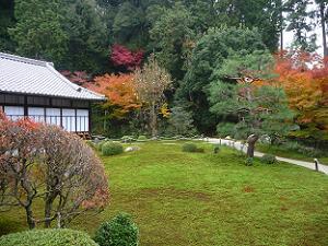 庭園の風景