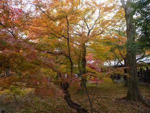 通天橋の入り口付近の紅葉