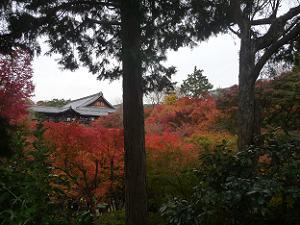 臥雲橋付近から眺める紅葉風景