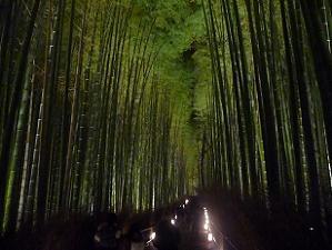 竹林のライトアップ