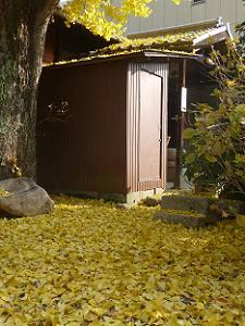 境内に散るイチョウの葉