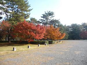 南側の紅葉
