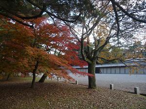 御所の塀と紅葉