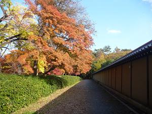 京都迎賓館近くの紅葉
